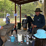 Eucalyptus oil distilling in progress